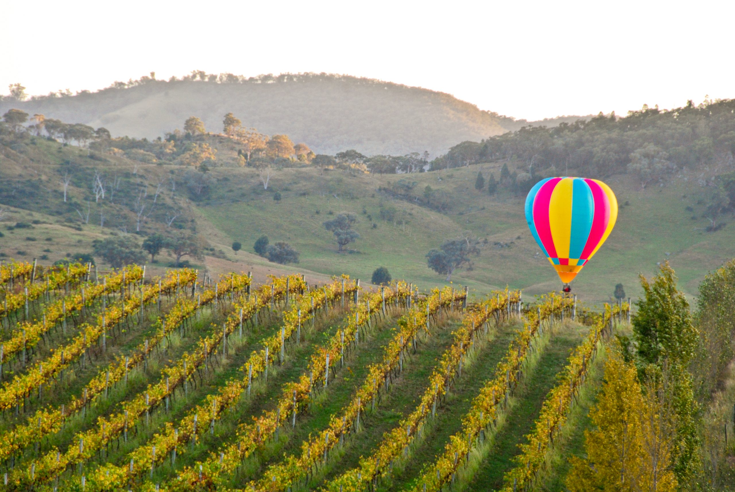 Balloon Aloft - Mudgee Region