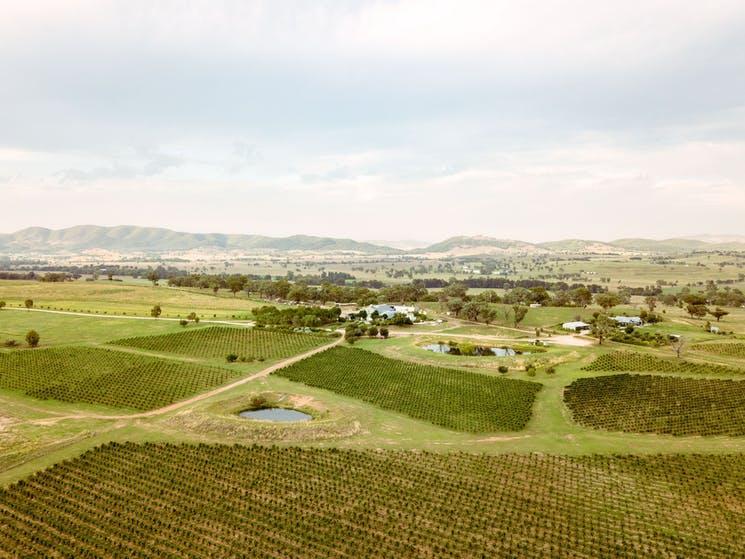 Lowe Wine Vineyard Walks