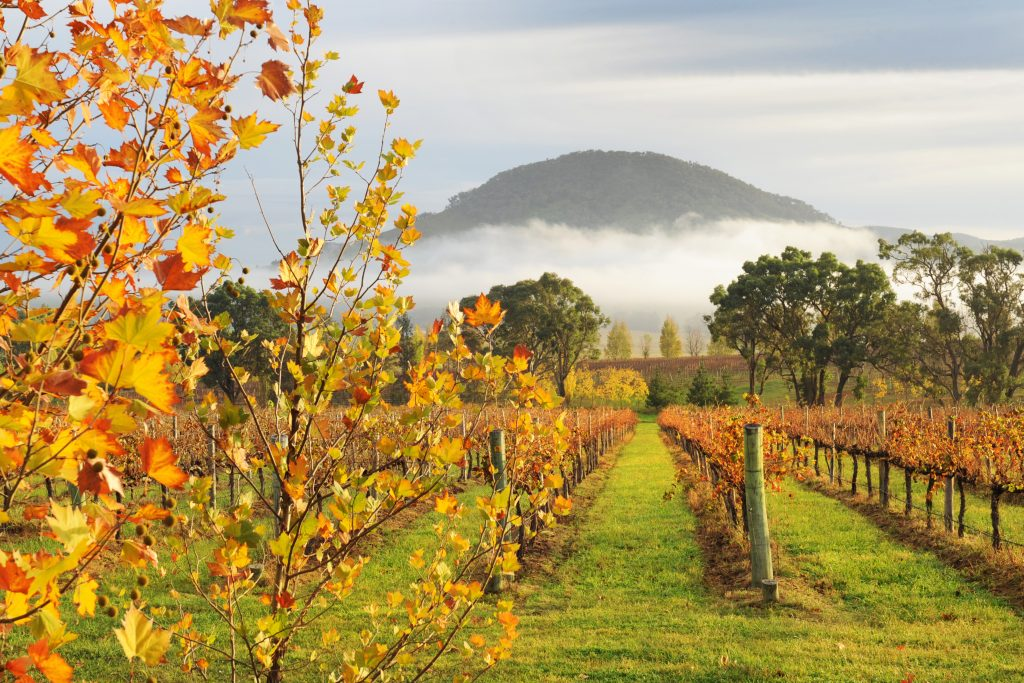 Mudgee Wine Autumn